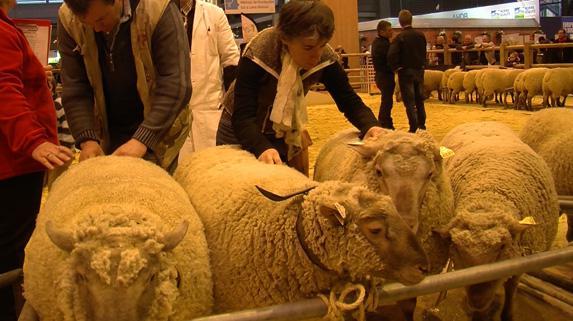 Agri85 - Salon de l agriculture resultat concours ...